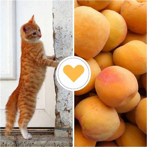 Cats My Name Is Peaches