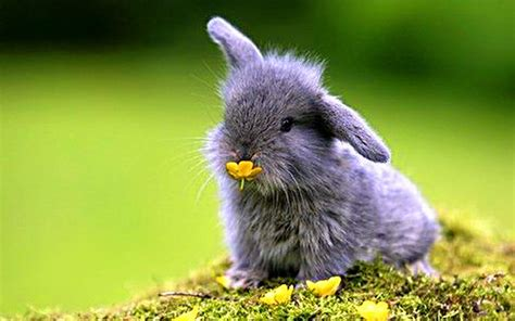 Baby Animals Wallpaper - bunnies nature animals baby animals wallpaper 1920x1200
