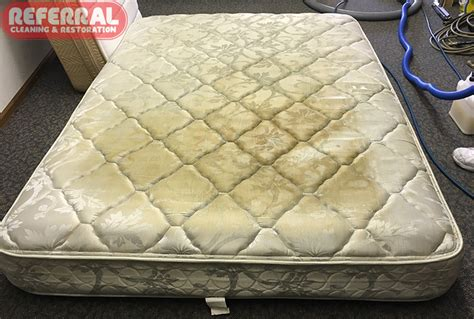 consumer mattress reviews fort wayne in referral cleaning restoration