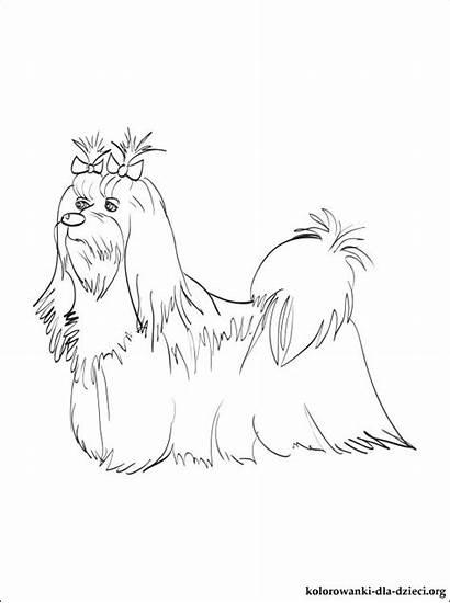 Maltese Colorare Coloring Disegni Dog Gratis Maltezer