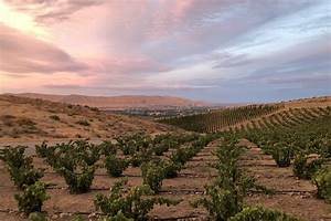Pinot Noir Vintage Chart Elevating Expectations In Washington State Wine