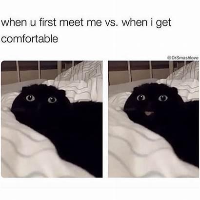 Memes Funny Meet Meme Cat Vs Octopus