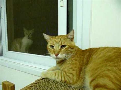 Angry Cat Attacks Camera