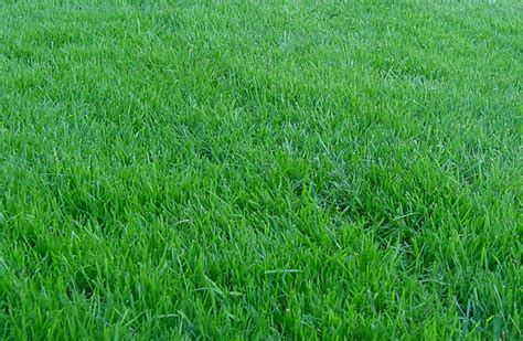 grass lawns lawn care programs for kitchener waterloo and cambridge