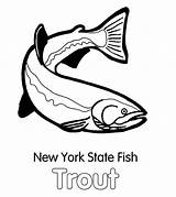 Trout Coloring Pages York State Fish Apache Template Brook Print Paper Tocolor Button Through sketch template