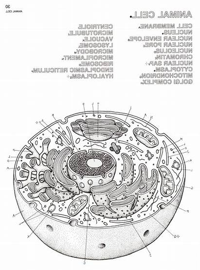Coloring Animal Worksheets Cell Biology Worksheet Printable