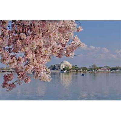 Travels with Jacki » Blog Archive The National Cherry