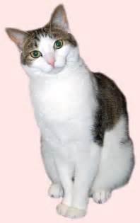 cat pics singapura picture