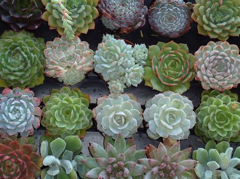 succulent photo creations and inspirations succulent love