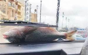 Direct Pare Brise : quand une temp te secoue malte il pleut des poissons ~ Medecine-chirurgie-esthetiques.com Avis de Voitures