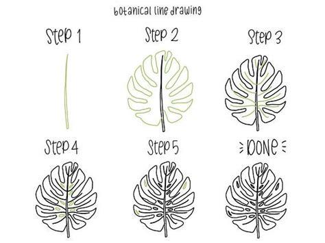 botanical  drawing  step  step