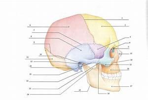 Skull Quiz