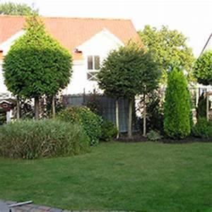 Schnell Wachsender Sichtschutz Immergrün : baumschule b ume und pflanzen wie taxus thuja ~ Michelbontemps.com Haus und Dekorationen