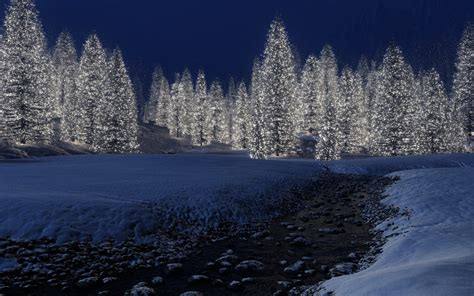 winter forest night wallpapers high quality outdoors
