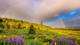 fremont flowers rainbow grass flowers clouds hd wallpaper