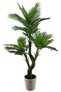 encyclopedia 9 ornamental plants toxic air vacuum