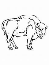 Bison Coloring Printable Aurochs Auerochsen Ausmalbilder Malvorlagen Animals sketch template