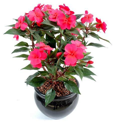 plante fleurie exterieur