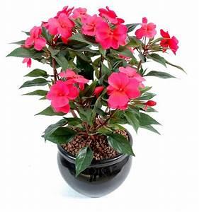 Plante Fleurie Intérieur : plante fleurie exterieur ~ Premium-room.com Idées de Décoration