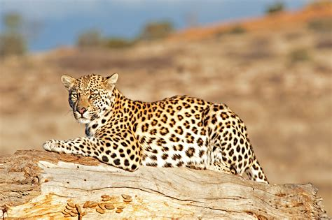 photographical safaris  south africa hunting safaris