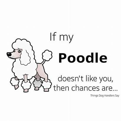 Quotes Poodle Poodles Standard Pets Sayings Cool