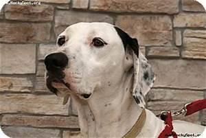 Laser (Spankee) | Adopted Dog | Newcastle, OK | English ...