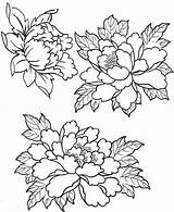 Embroidery Patterns Peony Coloring Flower Pages Peonies Drawings Designs Tattoo Painting Tracing Fabric рисунки пионов Con Drawing Flowers Japanese Floral sketch template