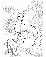 Coloring Hunting Deer Pages Popular sketch template