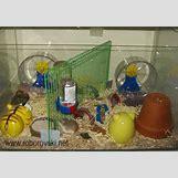 Robo Dwarf Hamster Cages | 600 x 421 jpeg 19kB