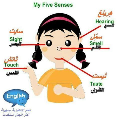 english images   senses human clipart