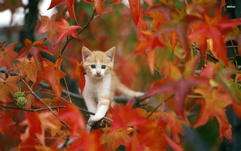 Autumn Animal Wallpaper - autumn pictures wallpapers wallpaper cave