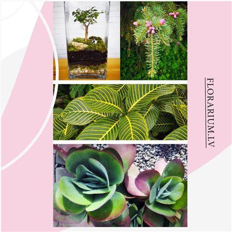 Florariums faktiski atdarina dabisku atlasīto augu biotopu ...