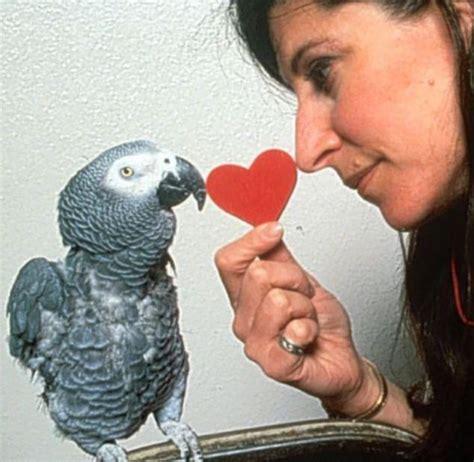 Bodies Hit The Floor Parrot by 100 Bodies Hit The Floor Parrot Parrots Your