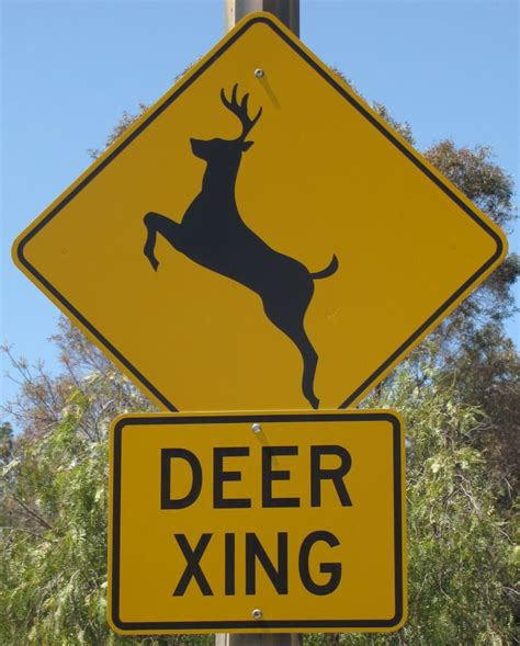 City Council Wants To Erect 'deer Crossing' Signs Downtown. Eaqual Signs Of Stroke. Brain Injury Signs Of Stroke. Igm Signs. Nightmare Before Christmas Signs. Religion Signs. Aging Signs Of Stroke. Daily 3 Signs. Bottled Water Signs Of Stroke