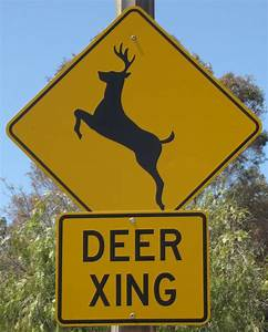 City council wants to erect 'Deer Crossing' signs downtown ...
