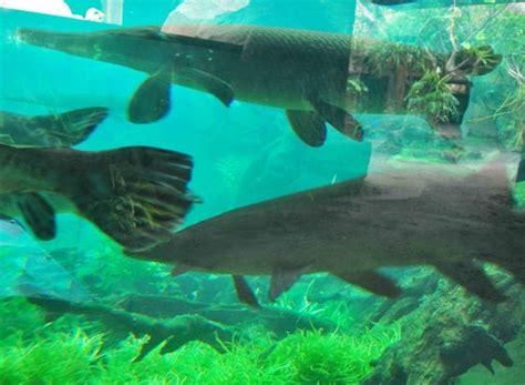 Harga Tanaman Aquascape Di Bandung