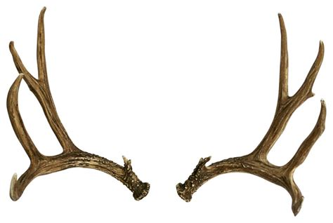 Purple Bedroom Rugs by Faux Deer Antler Set Mule Deer Right Left Rustic Home