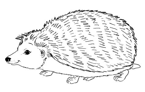 igel ausmalbilder tiere coloring pages print coloring