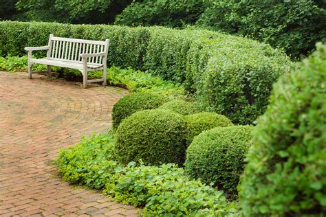 hedge bushes shrubs the top varieties for hedges brighter blooms nursery blog