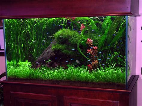 Ideas For Fish Tank by Stunning Freshwater Aquariums Freshwater Aquarium