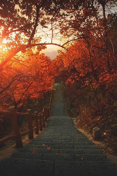 Autumn Trees Sunset Landscape 4k Path Woods