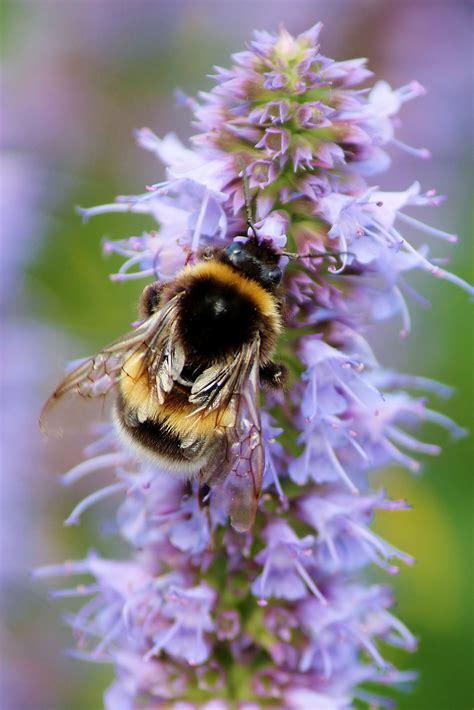 gardening  nature easy ways  create  bee friendly