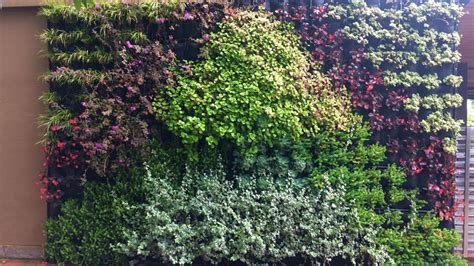 How To Plant Vertical Garden by How To Grow A Vertical Garden Tips For Growing A Plant