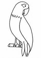 Parrot Coloring Pet Colornimbus sketch template