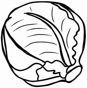 Cabbage clipart lettuce - Pencil and in color cabbage ...