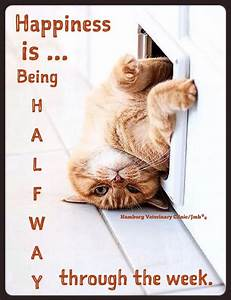 Wednesday Humor   Happy Hump Day   Mid week blues   Animal ...