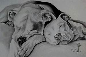 Pit bull drawing -- really captures the sweet spirit of ...