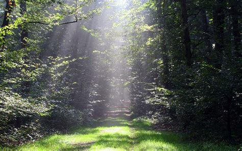 thicket sunny wood path grass wallpapers thicket sunny