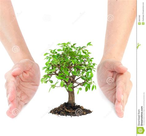 Hands Around Small Tree Stock Photo Image Of Seedling