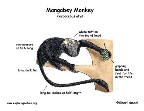 monkey adaptations images frompo 1